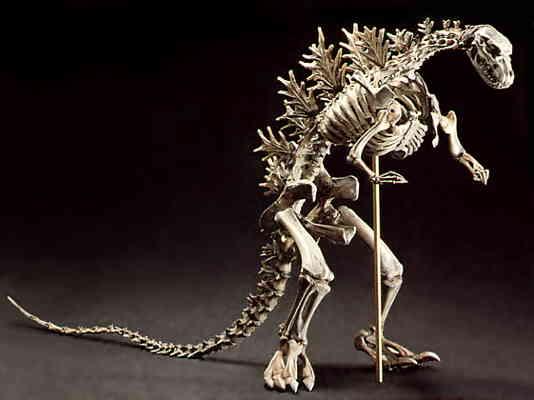 takeya godzilla skeleton model kit