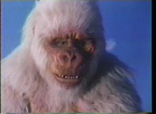 ivory-ape-5